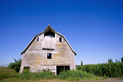 Old barn in the corn field. With blue sky Royalty Free Stock Images