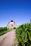 Old barn in the corn field. With blue sky Stock Images
