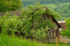 The old barn Stock Image