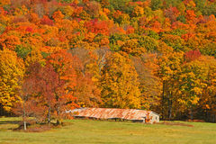 Old barn and Fall colors on hillside Stock Photography