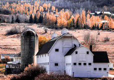 Old Barn and Fall Foliage. A rustic barn on a sun drenched hillside with a backdrop of trees in bright orange foliage Royalty Free Stock Photo