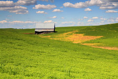 Old barn in a field. Royalty Free Stock Photography