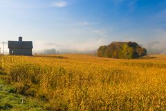 Old barn and a field of corn on an autumn morning in Vermont, US. Farm house and an island of trees in a foggy early morning corn field, Stowe Vermont, USA Stock Photography