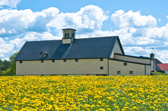 Old barn in a field of dandelions Stock Images