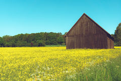 Old barn in the field Royalty Free Stock Photos
