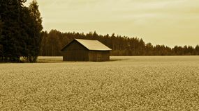 Old barn on field. Old barn on rapeseed field in autumn time Stock Image