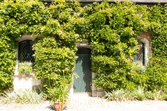 An old barn with front is covered with beautiful colored ivy during autumn. Fernleigh farm phoenix park dublin stables