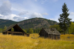 Old Barn in Golden field Royalty Free Stock Photo