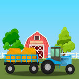 Old Barn and green field. High quality original trendy vector illustration of Farm tractor with wagons full of hay near old Barn and green field with apple tree Royalty Free Stock Images