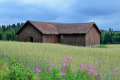 Old barn house under dark clouds. Old barn house on countryside. Thunder and storm coming soon, dark clouds on the sky. Middle of cornfield, willowherbs on front Royalty Free Stock Photo