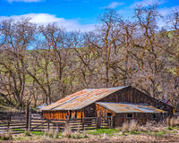 Old Barn in the Locust Tree Grove royalty free stock photos