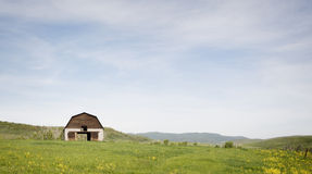Old Barn in a Meadow in Colorado Royalty Free Stock Images