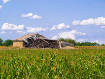 Old barn in the middle. The old disorganised farm in the field of corn Stock Photography