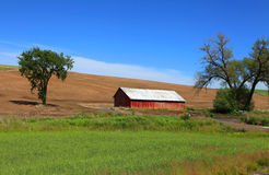 Old barn near Pullman. Old Barn in the fields near Pullman, Washington Royalty Free Stock Image