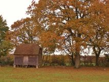 An old barn nestles in the shadows of a majestic oak tree in it`s autumn glory stock image