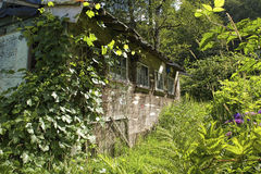 Old Barn. Overgrown with grapevines Stock Image