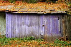Old barn purple with fallen leaves on the roof Stock Images