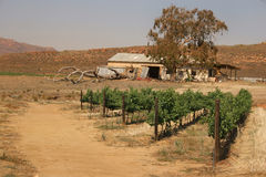 An old barn and a small vineyard somewhere in South Africa. Stock Photography