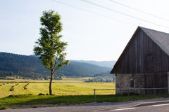 Old barn from stone and green tree nearby the road and field in mountains in Croatia Royalty Free Stock Image