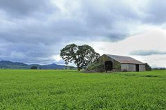 Old barn, stormy skies, green field, Oregon Stock Photo