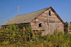 Old Barn Surrounded by Weeds. A very old weathered wood barn is surrounded by the summer's growth of weeds Royalty Free Stock Photography