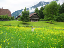 Old barn in Swiss alpine meadow. Old barn with a foreground of green grass and yellow flowers, with a background of mountains in the Swiss alps. A scarecrow stock photos