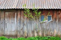 Old barn. Tree growing near the barn Royalty Free Stock Photos