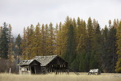 Old barn by trees. Royalty Free Stock Photo