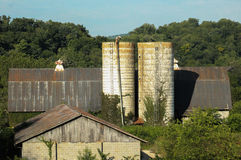 Old barn and two silos Royalty Free Stock Images