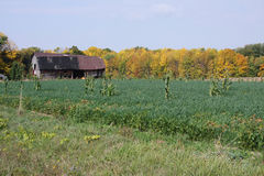 Barn Upstate New York Stock Image