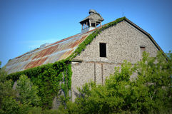 Old Barn with Vines Royalty Free Stock Photography
