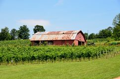 Old barn in vineyard Royalty Free Stock Image