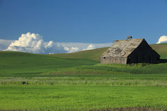 Old Barn In Wheat Field. Old barn located on a wheat field in the Palouse Stock Images
