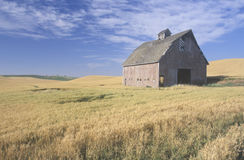 An old barn in a wheat field Stock Photo