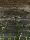 Old barn wood background texture Royalty Free Stock Images