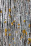 Old barn wood with Lichens Stock Image
