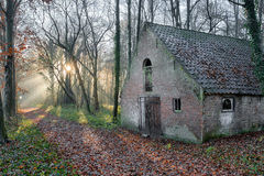 Old Barn in woods Stock Image