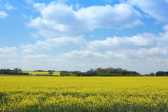 Old Barn in Yellow Rape Field Stock Photos