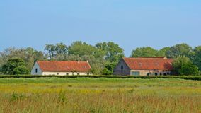 Old barns in a sunny meadow with many yellow wildflowers and lush green tres behind. Old brick stone barns in a sunny meadow with many yellow wildflowers and stock images