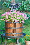 Old barrel with flowers Royalty Free Stock Photo