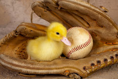 Old baseball glove and easter duckling Royalty Free Stock Images
