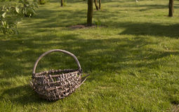 Old basket in orchard Royalty Free Stock Photography