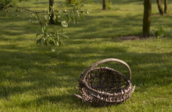Old basket in orchard Stock Image
