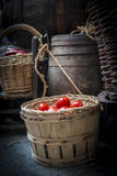 Old basket with tomatoes Stock Image