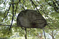 Old basketball backboard and hoop Stock Image