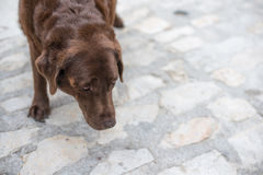 Old beaten dog avoids eye-contact with an unknown stranger Stock Images