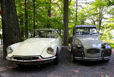 Old beauties in the wood Stock Photo