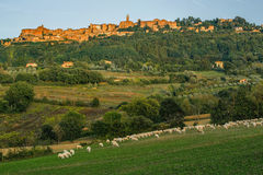 Old beautiful city in the sun of Tuscany, Pienza, Italy Stock Image