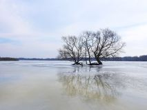 Nice tree in flood field, Lithuania Stock Images