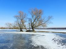 Old tree in flood field in winter, Lithuania. Old beautiful tree in flood field in winter and beautiful blue sky sunny day royalty free stock photo